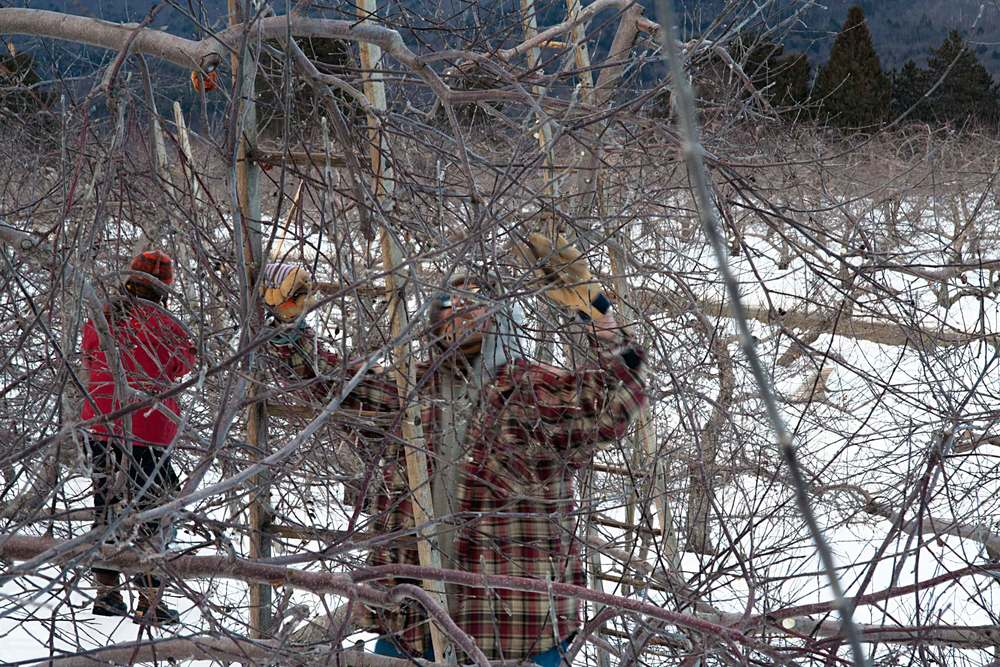 Four Ladders, Two Pruners, End of the Day