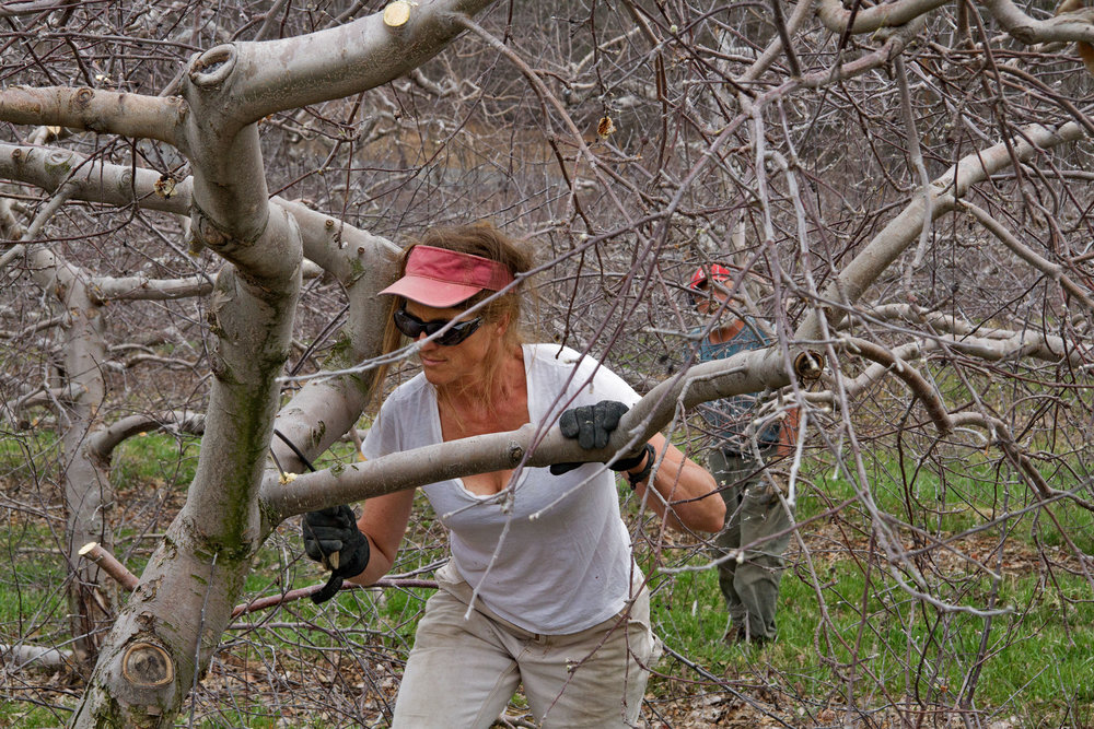 Andrea Takes Out a Branch