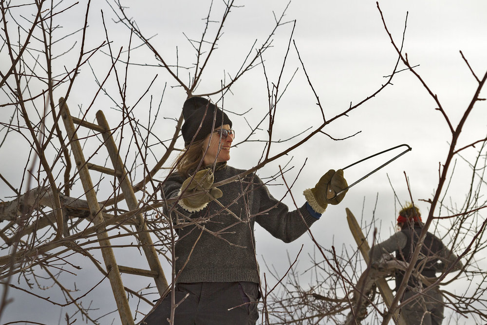 Andrea Leads the Pruning Crew