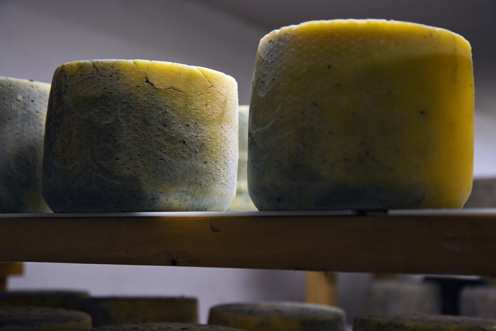 In the Cave: Blue Cheese Aging